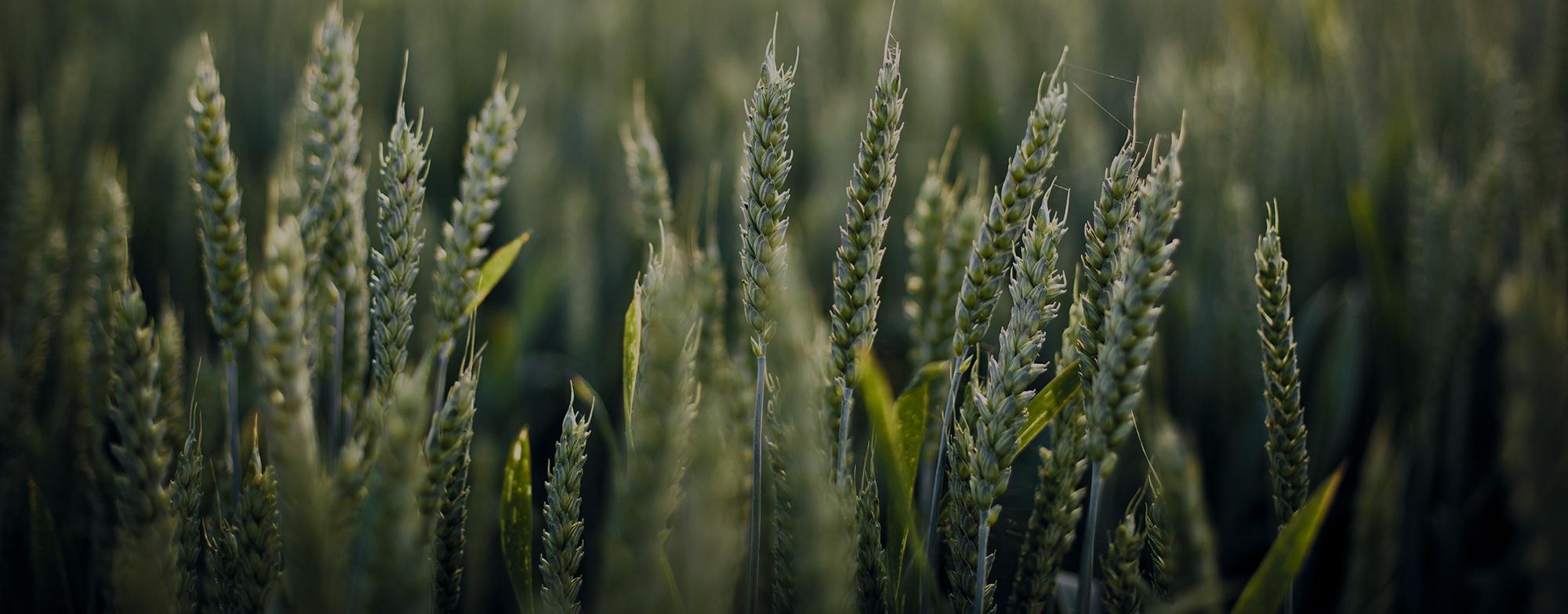 Сумська обласна профспілкова організація працівників агропромислового комплексу України